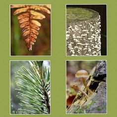 Woodland Photography 4 Fine Art Wall Prints/Photos on Canvas Amber Ivory Caramel & Evergreen Northern Nature Adirondacks Home Wall Decor