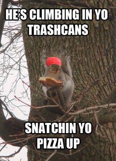 The LSU squirrels are resourceful...