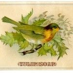 Vintage Advertising Graphic - Bird on Holly Branch