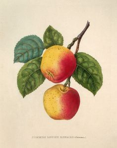 apples 1857