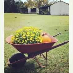 #fallonthefarm #fall #farm