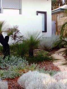 Coastal native garden- grass trees are so dr Seuss! Seaside Garden, Coastal Gardens, Beach Gardens, Outdoor Gardens, Australian Garden Design, Australian Native Garden, Australian Plants, Coastal Landscaping, Front Yard Landscaping
