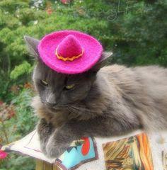 cat sombrero: YES!