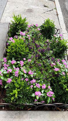 Stories • Instagram Planter Garden, Plants, Instagram, Plant, Plant Containers, Planets