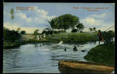 Hawai : Horses crossing the Uebi Scebeli river. Somalia 1953