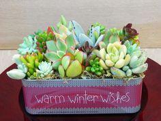 Succulent centerpiece - warm winter