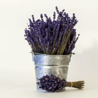 Bouquet-English Lavender #Lavender #EnglishLavender