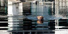 hurrican katrina dog rescue