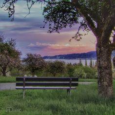 Who would like to sit on this bench and enjoy the sunset?  .  .  #meinuntersee #bodenseepage #erlebnisnatur #bodenseepic #pictureoftheday  #spring #sunset #sunset_lovers #skyporn #twilight #crepúsculo  #atardecer #Dämmerung #sonnenuntergang #hegau #Höri #Gaienhofen #LakeConstance  #LagoDeConstanza #Bodensee  #Germany #Alemania #Deutschland  #kodakpixpro #kodak_photo #AZ362