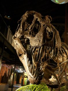 Tyrannosaurus Rex  | In #China? Try www.importedFun.com for award winning #kid's #science |
