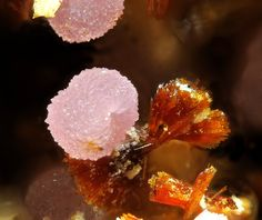 Strengite on Beraunite - Folgosinho, Portugal - fov mm Igneous Rock, Portugal, Rocks And Gems, Rocks And Minerals, Crystals And Gemstones, Pretty Little, Eye Candy, Petrified Wood, Gem Stones