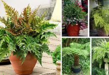 21 Best Ferns For Containers That You Can Grow Indoors & Outdoors Easily