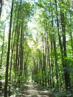 OMG one of my dream visions of walking down the aisle.  I have about ten or so like it.... a tall woodsy area with a row to walk down....I think this place has that LOL Now if only I could find it in Oklahoma LOL