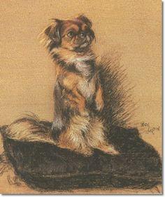 a Pekingese illustration