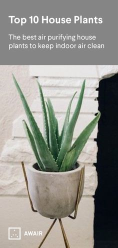 Plants take in benzene, trichloroethylene and formaldehyde, the 3 most harmful indoor toxins, and in turn produces clean air for us to breath. Adding the right house plants to your home is an easy way to help keep your air clean. www.getawair.com