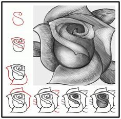 Easy steps to draw a rose