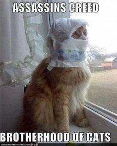 assasins creed cat image - Cat lovers