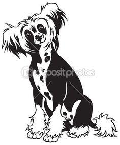 Китайская хохлатая собака черно-белый — стоковая иллюстрация #15472133