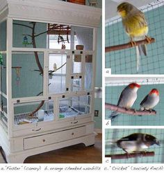 This is a great idea! Use an old armoire and turn it into a DIY aviary!!  I had one, just like this , my farther made me with english budgies in it.
