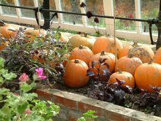 Clovelly Court Garden, UK