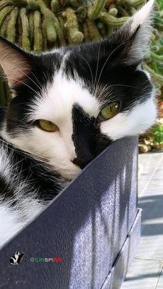 Happy  #Catboxsunday !