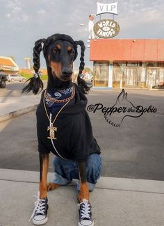 @Pepperthedobie As Snoop Dogg Doberman DobermanPinscher Dobe Dobermann Snoopdogg LongBeach Dog Costumes Halloween