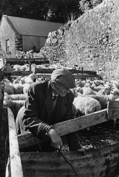 A flock of sheep on Fair Day in Drumkeeran, County Leitrim, Ireland, circa 1974.