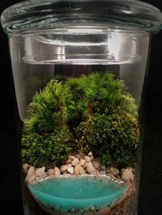 Beach Terrarium with Live Moss and Pebbles in Glass Jar image 1 Water Terrarium, Small Terrarium, Self Sustaining Terrarium, Water Spray, Apothecary Jars, Live Plants, Glass Jars, Clear Glass, Etsy