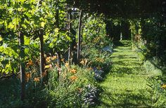 A long rustic pergola covered with wisteria and vines provides a shady walkway.