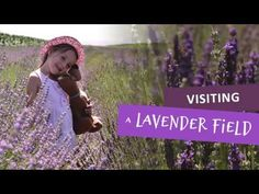 A few days ago we visited a lavender field. I can not describe the feeling of tranquility and relaxation, the openness of light purple and especially the sce.