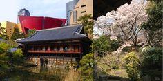 The garden of the Kokura castle before the full bloom of the cherry tree is gone. Taken this photo, April 2015 Yamaguchi, Fukuoka, Cherry Tree, Castle, Bloom, Cabin, Explore, House Styles, Garden
