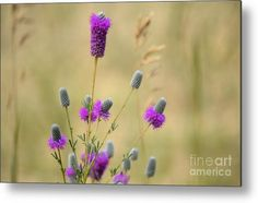 Purple Metal Print featuring the photograph Wildflower 8319 by Bonfire Photography