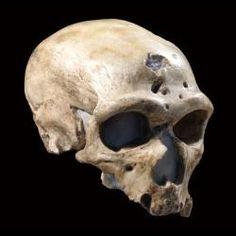 Image of La Chapelle-aux-Saints, skull, 3/4 view