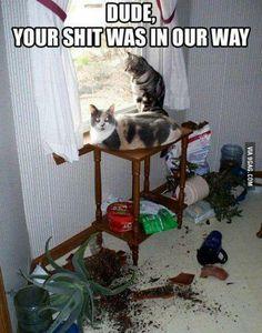 Damn cats... lol \µ/—>X)