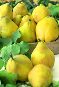Quince 'Serbian Gold' 9L