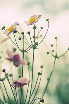 """Bláithín, which means, in Irish gaelic, """"little flower."""" Love this, so delicate with lovely pops of color"""