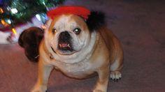 Chloe's 10th Christmas with us