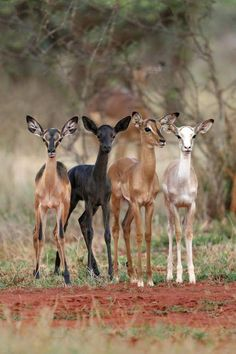In South Africa, Ranchers Are Breeding Mutant Animals to Be Hunted - Tierbilder - Animals Wild Rare Animals, Cute Baby Animals, Animals And Pets, Funny Animals, Animals Images, Amazing Animals, Animals Beautiful, Beautiful Creatures, Tier Fotos