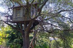 Treehouse - in the old Sugar Maple Tree beside the garage. What fun for the Grandkids!