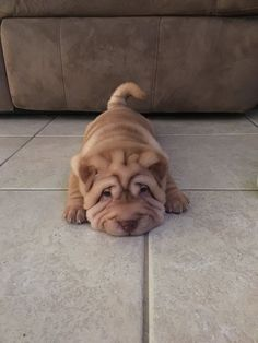 150 Best Chinese Shar-Pei Dog Names Source by sophort dog dog memes dog videos videos wallpaper dog memes dog quotes dogs dogs pictures dogs videos puppies puppy video Cute Dogs And Puppies, Baby Dogs, Doggies, Small Puppies, Baby Baby, Cute Little Animals, Cute Funny Animals, Puppy Barking, Cute Animal Pictures