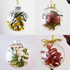 Set of 4 Australian Native Flowers Christmas Baubles  What better decoration for an Aussie Christmas tree than our gorgeous native flowers. This set of four baubles includes one flowering gum bauble, one Geraldton wax flower bauble, one kangaroo paw and of our gorgeous golden wattle