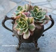Image result for lavender silver succulents centerpiece