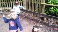 Sophie and Lily feeding twi of the centre parks ducks. Bristol Zoo, Family Video, Ducks, Centre, Lily, Videos, Orchids, Lilies
