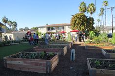 Hundreds of volunteers working through the weekend have transformed an unattractive community gathering place off Aster Street in Escondido into a light, bright, warm space. Volunteer Work, Sustainability, Landscape, Places, Scenery, Corner Landscaping, Sustainable Development, Lugares