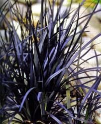 1000 images about ophiopogon on pinterest ophiopogon japonicus grasses and groundcover for shade. Black Bedroom Furniture Sets. Home Design Ideas