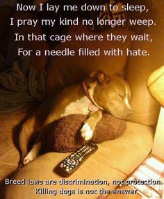 Oh wow...  I think I just got punched in the heart.....  Please help in the fight to stop BSL.  Educate yourselves and others!