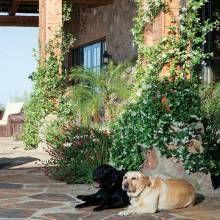 Italian-Style Desert Garden - Phoenix Home & Garden