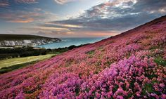 Isle of Wight Coast Path
