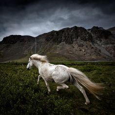 """""""come away"""" by Johann Smari: I'm not usually a fan of horse photos, but this moody shot as a great look to it."""
