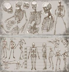 Character Design Collection: Bones Anatomy
